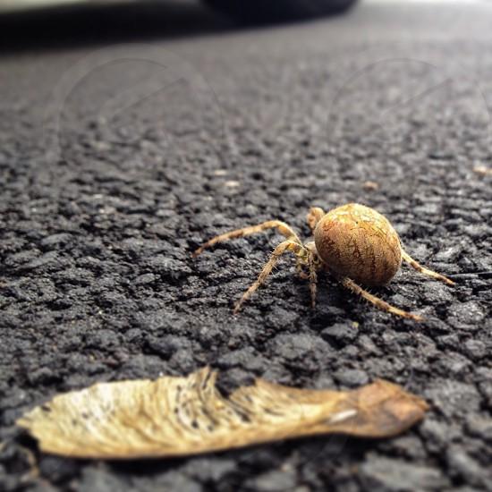 Beautiful spider crawling by a fallen leaf photo