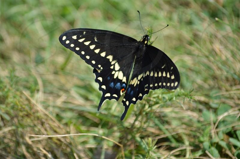 Butterfly @ Gettysburg photo