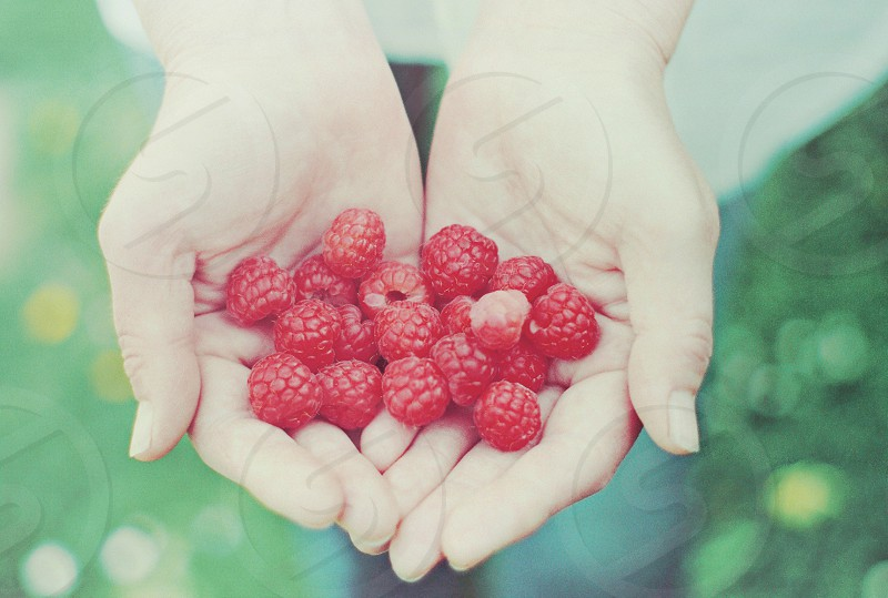 English fruit picking - raspberry hands bokeh summer food photo
