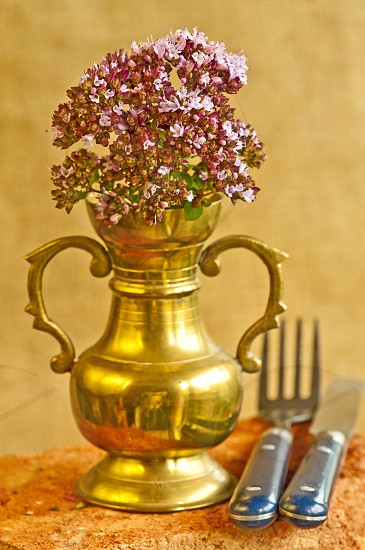 thyme herb of Provence photo