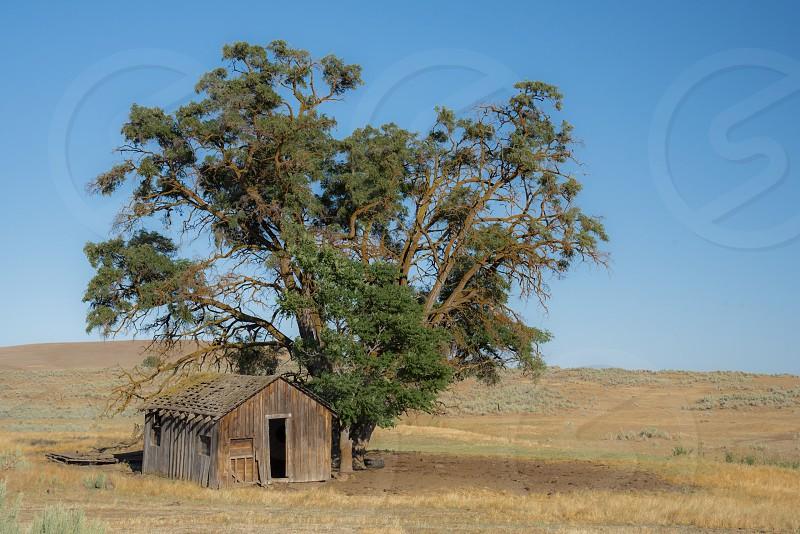 Tree shack shed barn field Oregon rundown dilapidated old juniper  photo