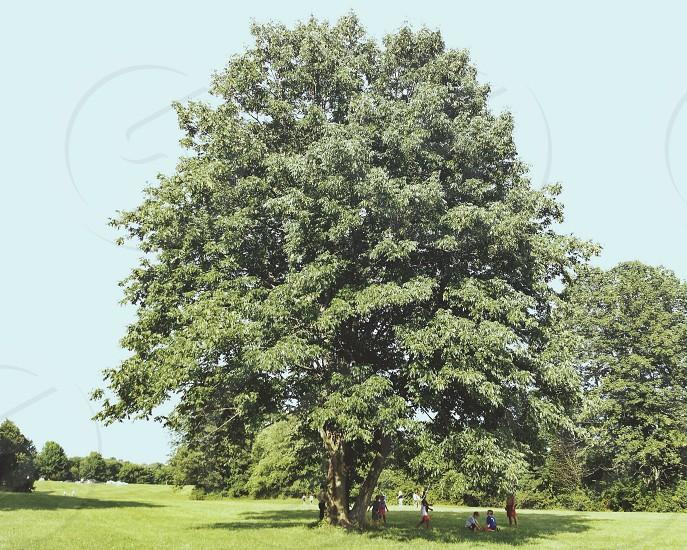 oaktrees photo
