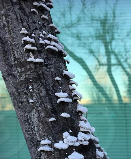 white fungi in gray trunk photo