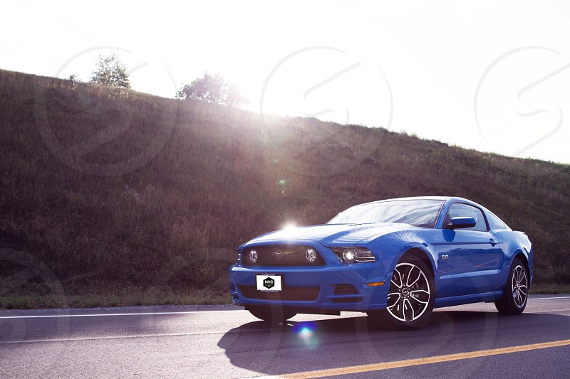 The Mustang. photo