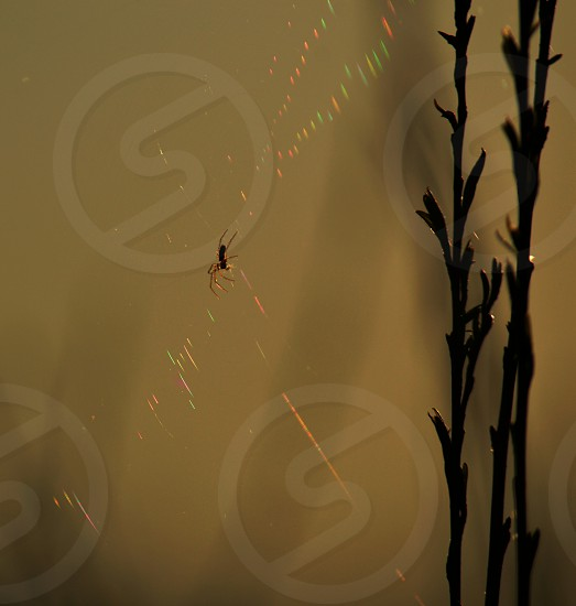 spider weaving its web photo