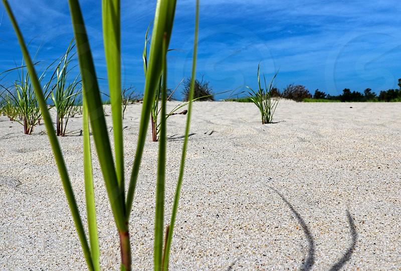 Low angle shot of sea grass on a white sand beach photo