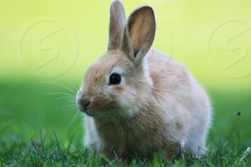 Cute baby bunny rabbit photo