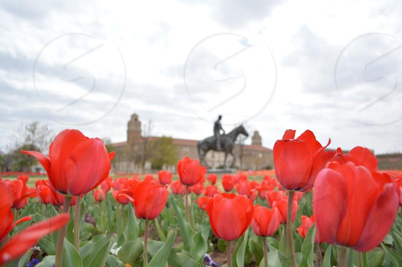 red flower field photo