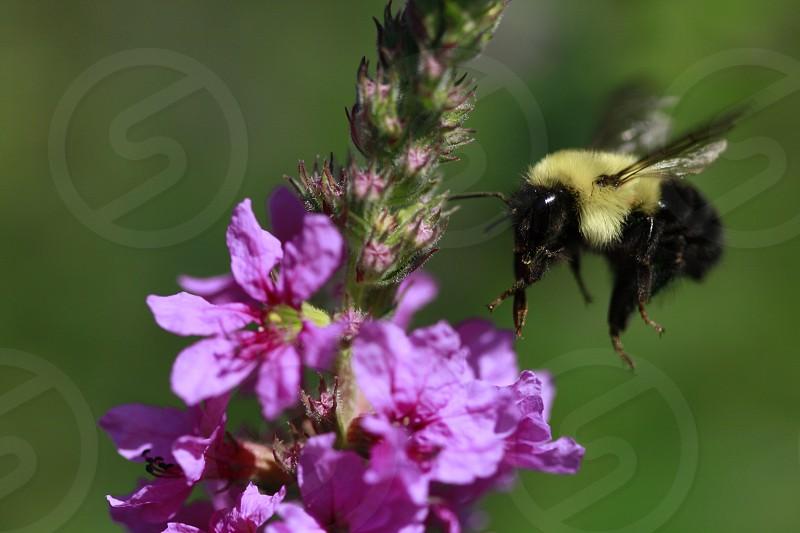 Bee Incoming 2014 photo