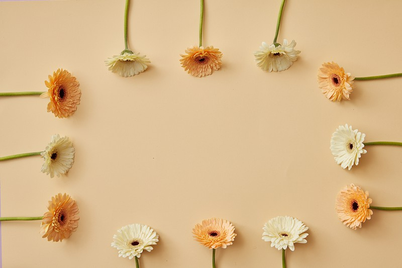 A frame made of beige and orange gerbera flowers on a beige background as layout for post card on Valentine's Day or Mother's Day with copy space. Top view photo