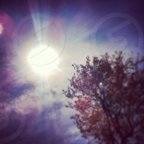 tree. summer. nature. sun flare. photo