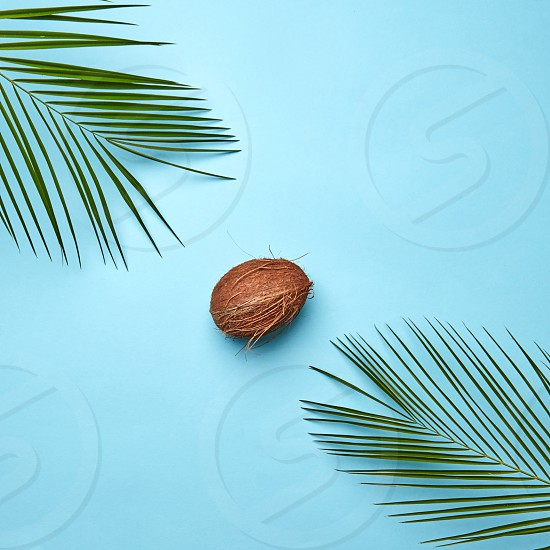 Corner frame of the leaves of a palm tree and a whole coconut on a blue background with copy space. Creative food composition. Flat lay photo