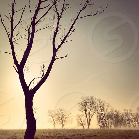 brown tree photo