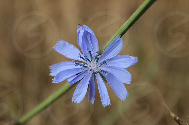 An amazingly bright blue flower.  photo