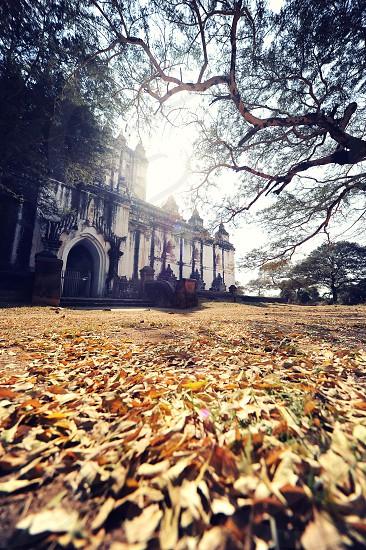autumn leaves photo