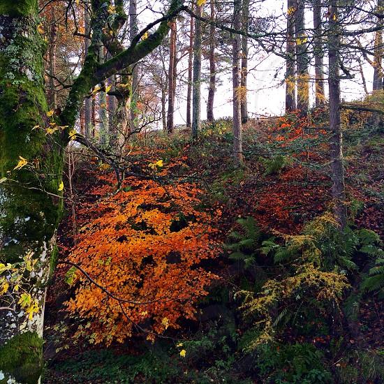 Autumn in Scotland  photo