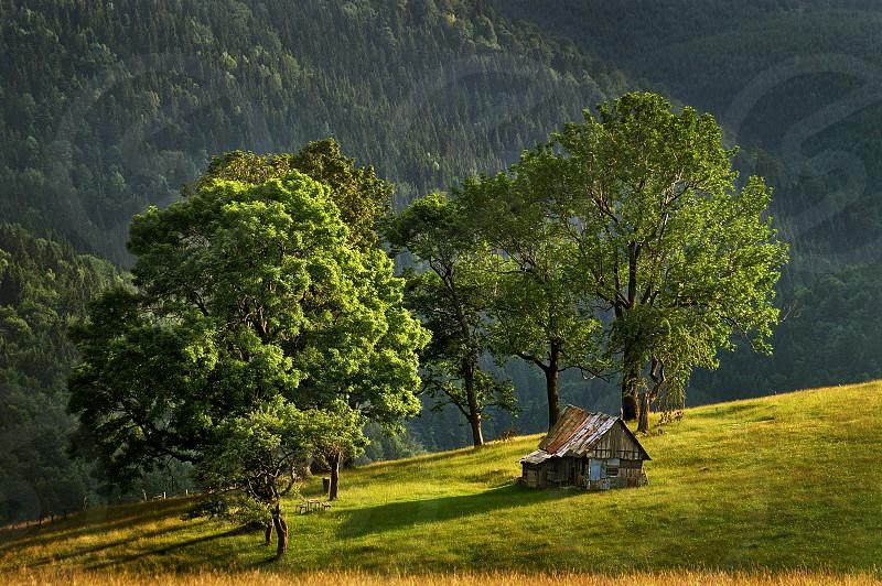 "Sunset on the mountain - Cindrel mountains ""Valari"" peak area Transylvania Romania 1300m photo"