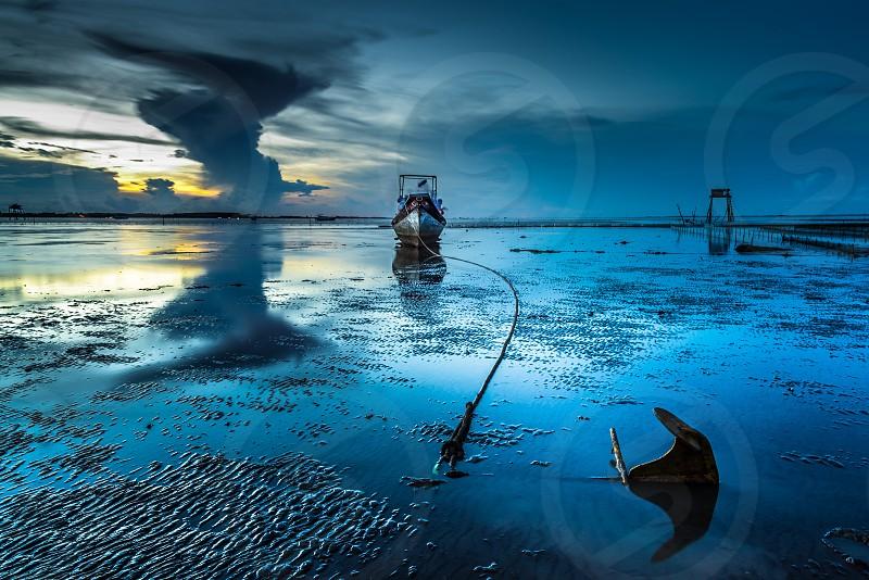 Wings of sea photo