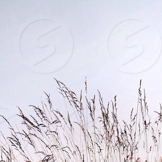 wheatfield view photo