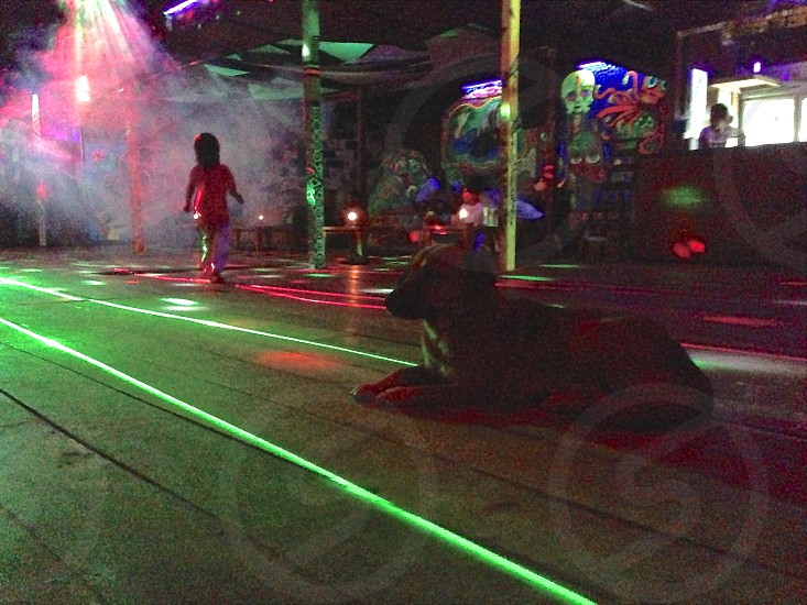 nightclub Thailand party is over dark nightclub disco doggie child and dog in darkened empty nightclub. photo