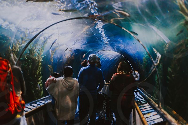 Underwater tour. photo