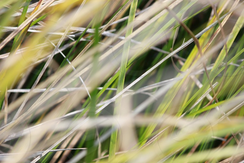 focus photo of green grass photo