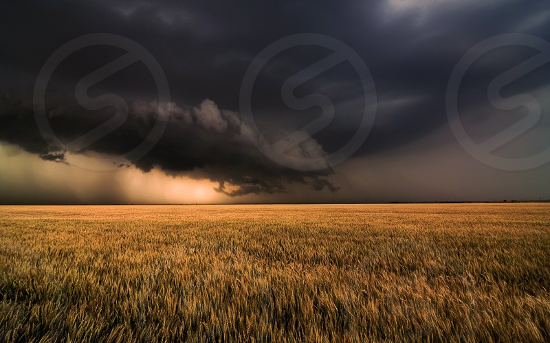 An ominous Spring storm over a golden wheat field in western Kansas. photo