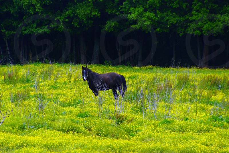 black and brown horse on yellow and green grasses photography photo