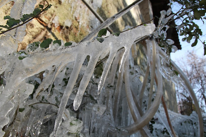 ice cold frozen plants photo