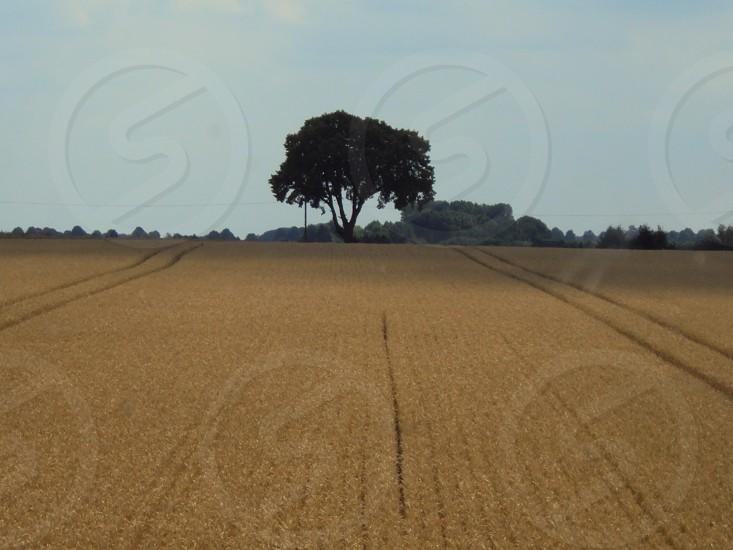 Farmland in North Western Germany.  photo