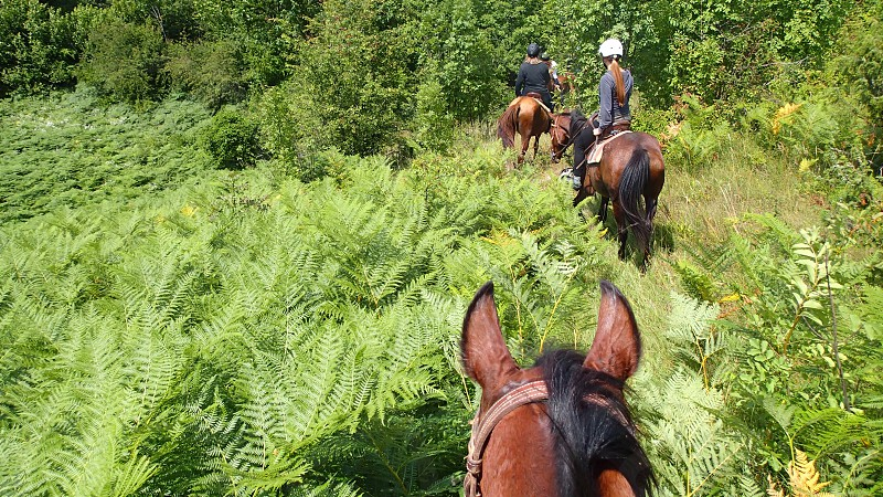 Horseback riding in the field photo
