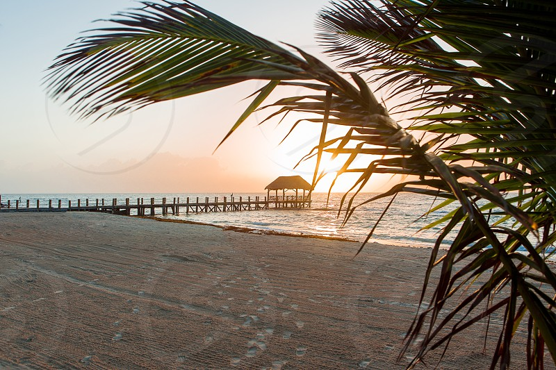 The sun rising over the coast of Mexico. Palm trees wave in the foreground.  photo