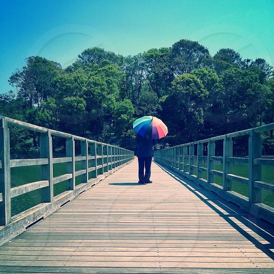multicolored umbrella  photo