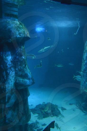 Fish in Underwater Aquarium photo