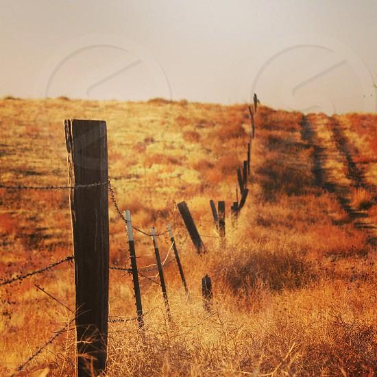 black barb wire photo