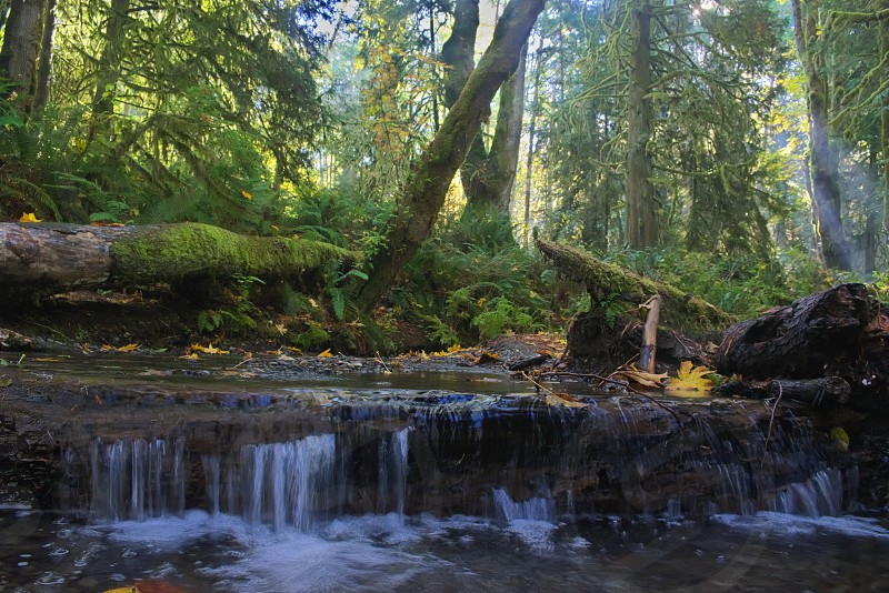 Little creek in Washington. photo