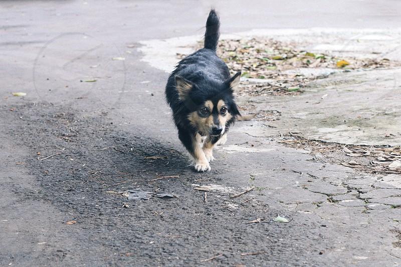 black dog walking on the road photo