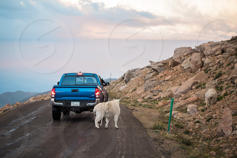 Toyota Tacoma on Mount Evans in Colorado. Highest paved road in America.  photo