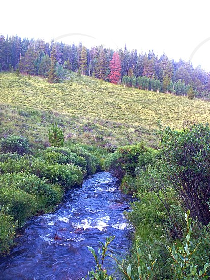 Bubbling brook.  photo