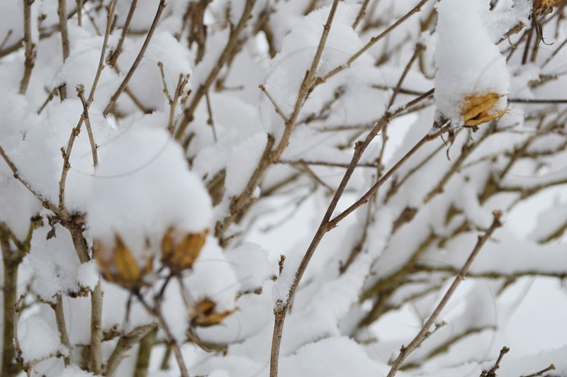 brown stems covered on white snow during daytime photo