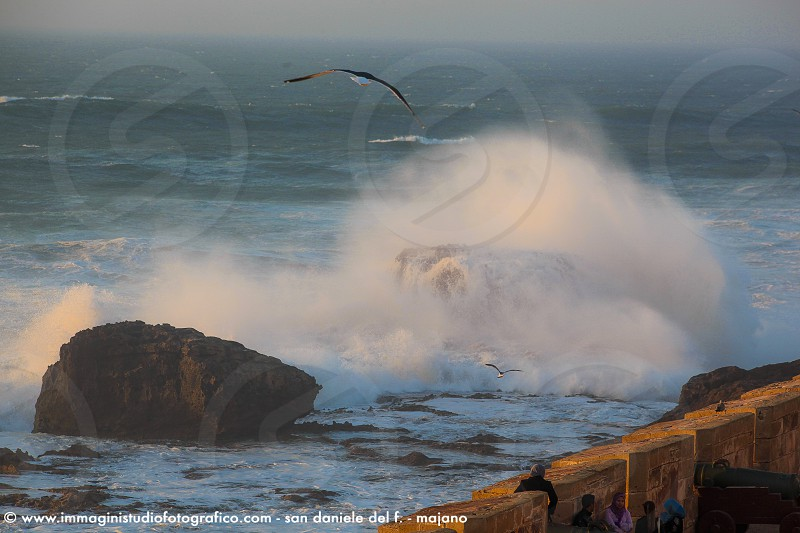 brown bird on flight above rock on body of water with waves photo