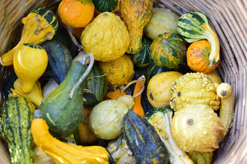 Fresh harvest gourds and squash basket photo