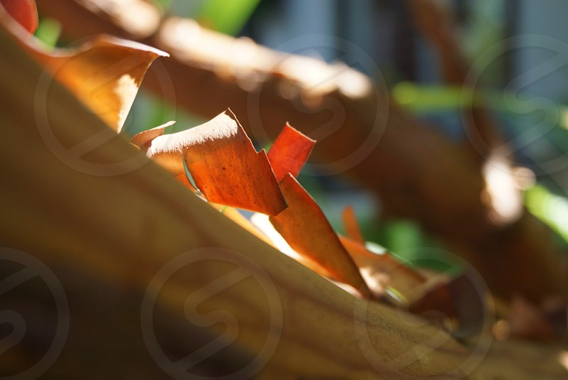 orange dried leaves photo