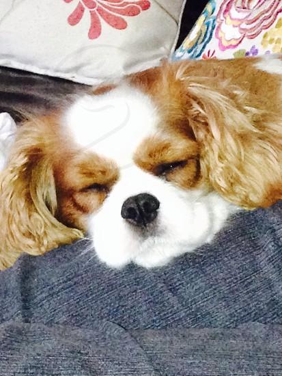Baby's sleeping! photo