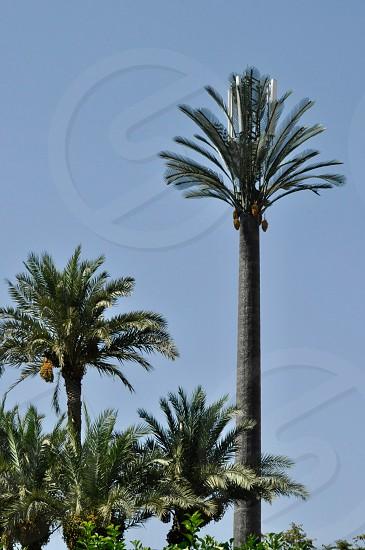 Palm Tree Radio Tower photo