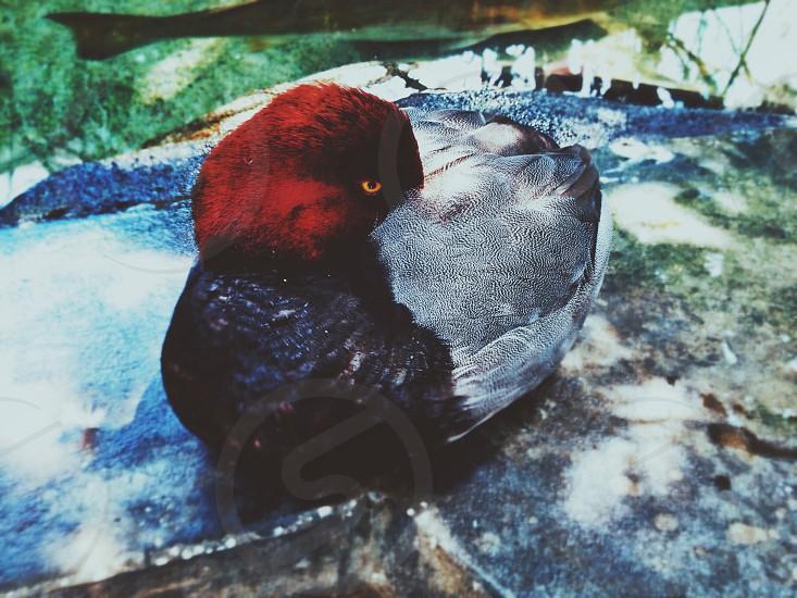 Redhead VSCO Filter P5 photo