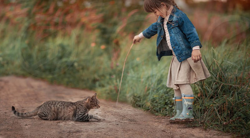 cat portrait brown tabby domestic pet animals look eye kitten seriously  play playing outdoor summer grass road sand nature girl child children childhood people walking photo