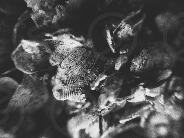 Shells  photo
