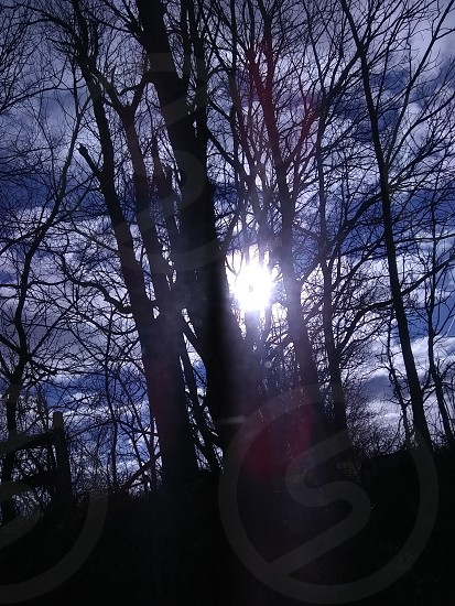 #trees #sun #bright #green #sunny #landscape photo