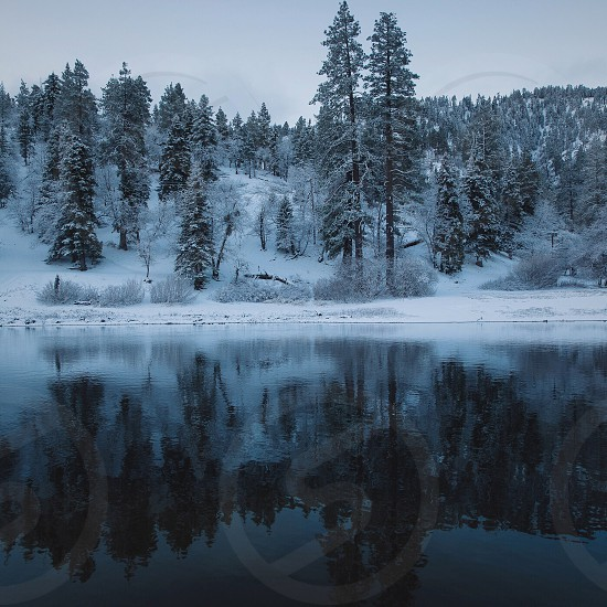 reflective photography of pine trees by riverside photo